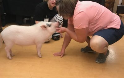 Meet the Staff | Jorge the Therapy Pig
